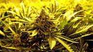 post-image-In Business: Colorado's Big Marijuana Experiment
