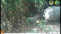 絶滅危惧種のサイに赤ちゃん、インドネシアの国立公園で朗報