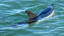 Rare dolphin sighting off Norfolk coast