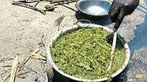草を食べて腹を満たす人々 内戦続く南スーダンで