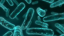 What is a superbug?