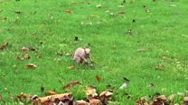 The 'famous' bald squirrel of Dunstable