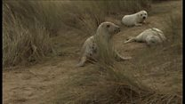 Seal gives birth to 'rare' twin pups