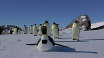 Fake penguin tricks pal into starring role
