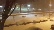 Deer enjoy snowy Washington streets