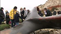 Hunstanton whale attracts sightseers
