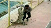 Leopard wreaks havoc in India school