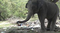 Tourist 'killed on elephant ride'