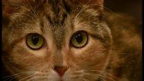 猫のための音楽 「聴衆」の反応は?
