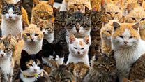 Welsh Assembly launches 'manifesto for cats'