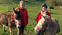 Could this be the end of the British beach donkey ride?