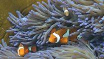 サンゴの「白化」とは? 気候変動も影響