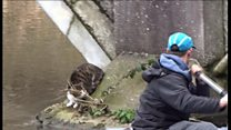 Bridge rescue cat reunited with owner
