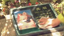 Paying respect to deceased pets ahead of Tomb Sweeping Day