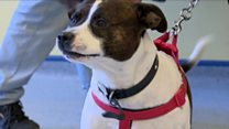 Law change to microchip all dogs in Scotland