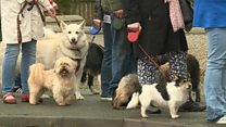 Tail back ahead of dog microchip law change