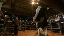 Dairy industry turns sour for farmer