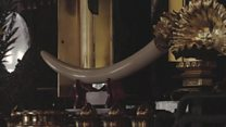 日本の象牙取引 登録制度の不備指摘も
