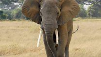 The war on elephants