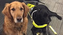 Training to use a guide dog isn't always a walk in the park