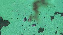 Drone registra ataque feroz de tubarões contra baleia na Austrália