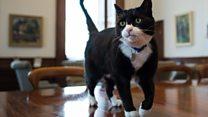 英外務省の猫 日々つづるツイッターが人気に