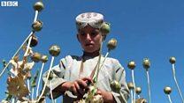 アフガン農家のけし栽培 政府は貧困が背景と