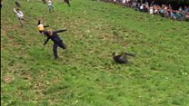 Double Gloucester tip for cheese race