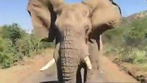 Arnie v elephant