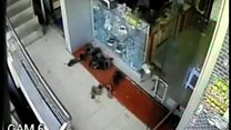 Macaco malandro dribla homem que lhe deu comida e rouba joalheria na Índia