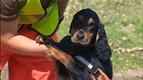 Sniffer dog aids newt conservation