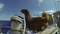 Meet Monique, the hen sailing around the world