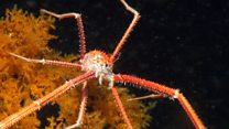 Scientists launch mission to the deep