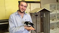 Man becomes 'friends' with rescued magpie
