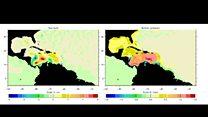 El misterioso silbido que hace el Mar Caribe
