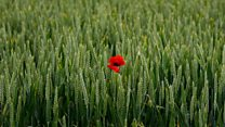 Somme battle: 100 years on