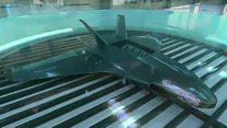 Animación de avión que crece en laboratorio