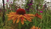 """A """"bee's-eye"""" view of RHS Hampton Court Palace Flower Show"""