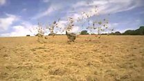 Hot air sends farm's hay into spin