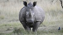 Terrified father: 'Rhinos charged at my family's car'