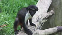 Zoo welcomes new monkey arrival