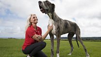 Four foot pooch aims to become world's tallest dog