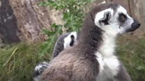 Babies booming at wildlife park