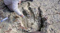 Cómo es la inmensa huella de dinosaurio hallada en Bolivia