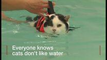 猫は水が嫌い…なはずが すいすい減量に成功
