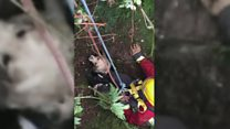 Dog rescued after mine shaft fall