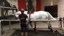 Horses on treadmills at Hartpury College
