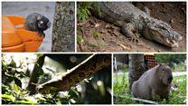 'Na moita': capivaras, jacarés e outros animais que vivem lado a lado de moradores do Rio