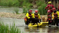 Man and dogs rescued from River Don island