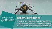 Cientistas criam 'besouros ciborgue' controlados à distância